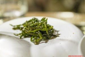 Salicornia, Signum, Salina