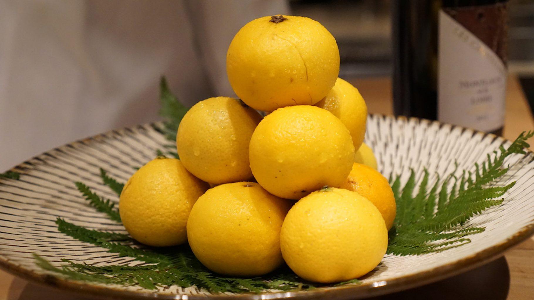 Sugalabo, genko citrus