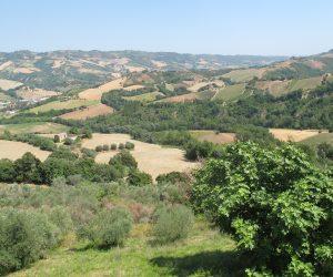 Mangialonga Picena: Il Racconto dell'Evento, Passeggiando nelle Marche