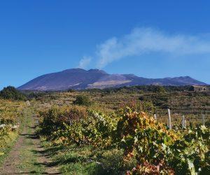 Spumante Etna Doc