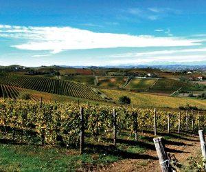 Consorzio vini Colline del Monferrato Casalese