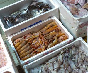 mercato ittico chioggia